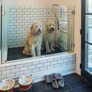Keep Your Dog-Friendly Home Clean and Tidy